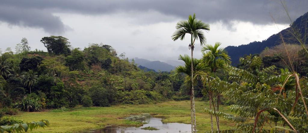 Sinharaja Rainforest  (photo copyright Mike Jarvis)