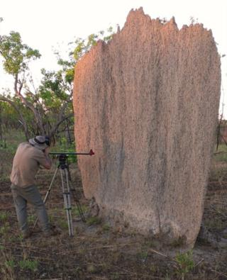 Documentary filming of Magnetic Termite Mounds at Litchfield National Park  (photo copyright Mike Jarvis)
